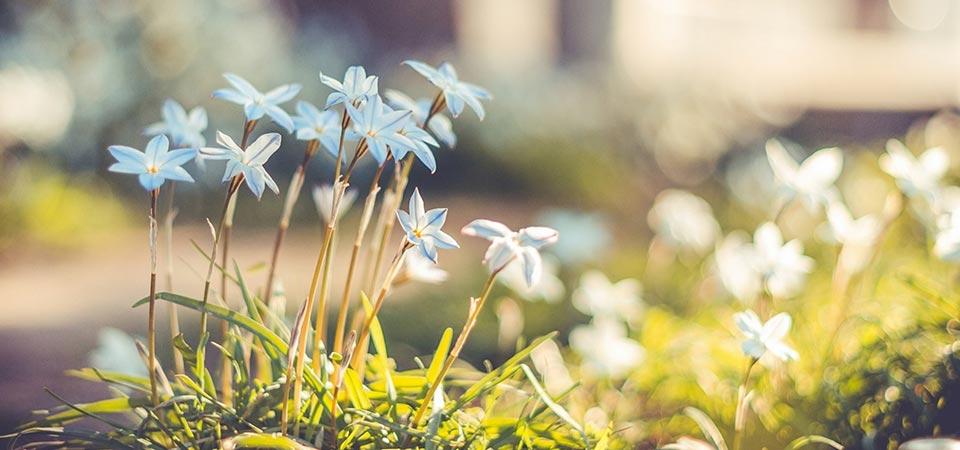 Conexão Semanal – Caminho de Gratidão