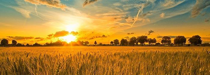 Conexão Semanal – Cuidar do Terreno