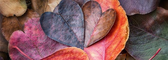 Conexão Semanal – O Princípio do Amor